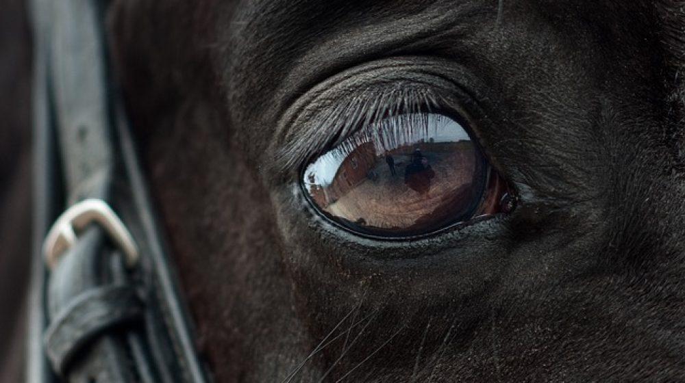 horse-2112196_640