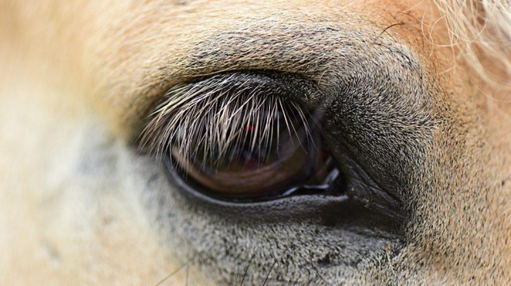 horse-eye-4325656_640